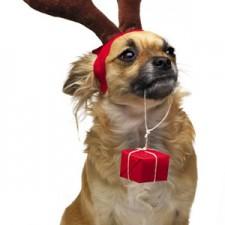 Veselé Vánoce :)
