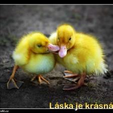Obrázky na profil lidé.cz