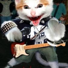 Drsná kočka