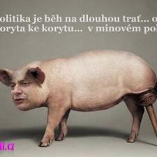 Politika je běh….