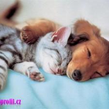 Kočička a pejsek