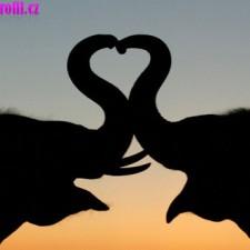 Sloní láska